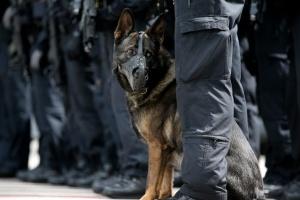 Полиция Германии провела операцию против немецкого Ку-Клукс-Клана