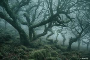 Фотограф показал сверхъестественную красоту леса в Англии