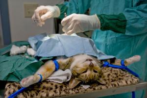 В Сумах студенты-ветеринары стерилизуют бездомных животных