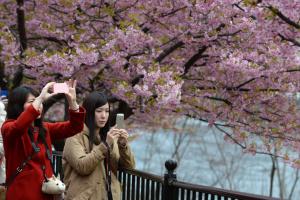 Япония готовится к раннему ханами