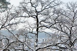 В Украину идет похолодание -  ночью до 14° мороза