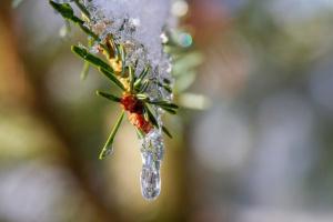 Україні обіцяють весняну погоду - у неділю до 14° тепла