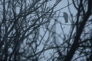 Синоптики попередили про погану видимість через тумани