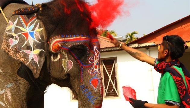 В Непале повели конкурс красоты среди слонов