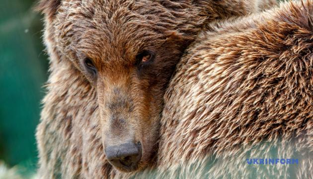 Реабилитационный центр для медведей в Синевире празднует юбилей