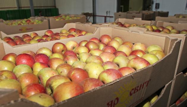 Украина в прошлом сезоне увеличила экспорт яблок в 1,5 раза
