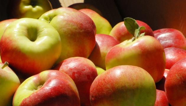 На Херсонщині урожай яблук очікується нижчим за минулорічний