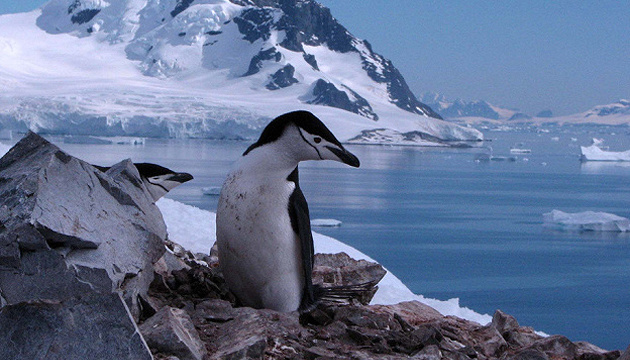 Турция создает постоянную базу в Антарктике
