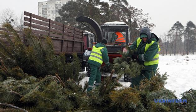 Пункты приема елок будут работать в Киеве до 1 февраля