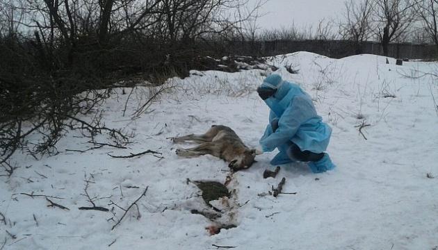 У Бердянську вовк напав на трьох людей
