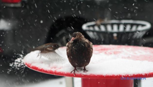 Синоптики на среду прогнозируют мокрый снег и туман