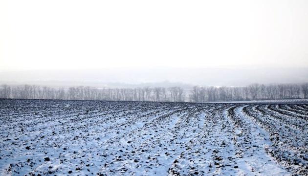 Морози не завдали шкоди озимим через достатній сніговий покрив - НААН