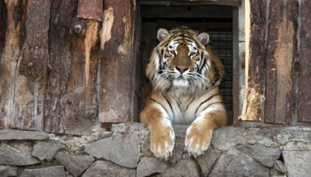 """Кличко показав, як хижакам у зоопарку влаштовують """"полювання на здобич"""""""