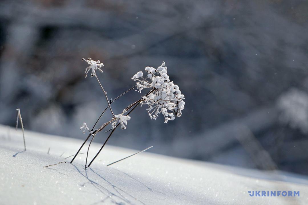 Фото: Віктор Кошмал