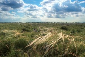 За 10 років природні зони в Україні зсунуться з півдня на північ на 150-200 кілометрів – екологи