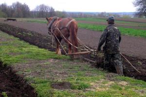 В Украине количество личных крестьянских хозяйств уменьшилось почти на 1%