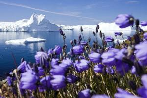У Трампа хотели ежегодно платить Дании $600 миллионов за Гренландию — WP