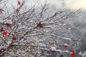 На вихідні українцям прогнозують мороз і сильний вітер