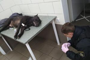 У Києві чоловік нацькував свого собаку на патрульних