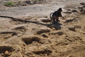В Австралии нашли дорогу динозавров, которой 95 миллионов лет