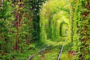 """К """"Тоннелю любви"""" проложат два новых маршрута"""