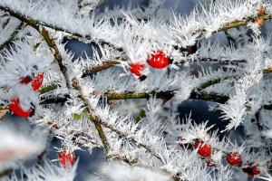 22 лютого: народний календар і астровісник