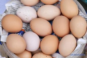 Eierproduktion in der Ukraine um fast 14 Prozent geschrumpft