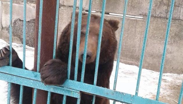 Зі скандального звіринця на Донеччині забрали останніх 5 ведмедів