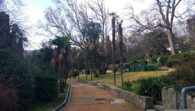 В оккупированном Крыму погибли старейшие веерные пальмы Алупкинского парка