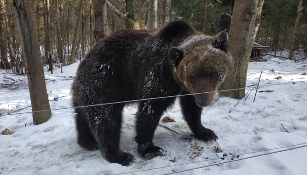 Скоро весна: в Галицькому нацпарку прокинулися ведмеді