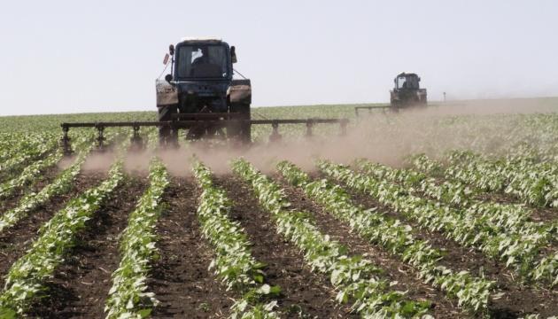 Посівні площі під цукровими буряками цьогоріч скоротяться на чверть - експерт