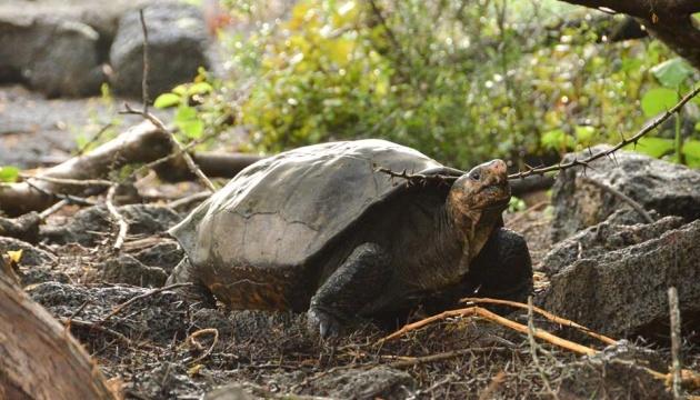 На Галапагосах знайшли черепаху, яку вважали вимерлою понад 100 років