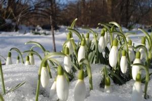 8 березня в Україні буде зі снігом і морозом