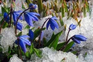 Українцям прогнозують дощ, мокрий сніг і нічні морози