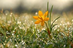 """Апрель """"попрощается"""" дождями и похолоданием"""