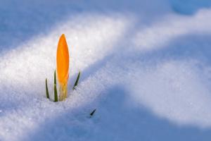 Перший день весни принесе в Україну мокрий сніг і до 10° тепла