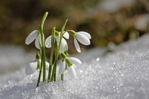 Зима ще нагадає про себе: наступного тижня прогнозують до 14° морозу
