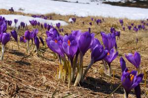 Весна не спешит: синоптики прогнозируют мокрый снег