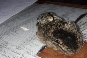 Во время пожара спасли зайчонка