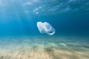В желудке мертвого кита нашли 40 килограммов пластика