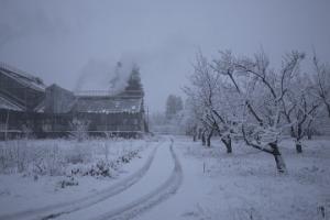 """""""История зимнего сада"""" представит Украину на кинофестивале в США"""