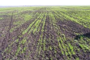 В Україні всі посіви пережили зиму
