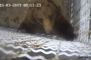 Набридло: у Маріупольському зоопарку ведмідь зірвав камеру спостереження