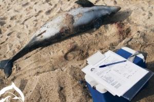 Des dauphins meurent massivement au large des côtes de la Crimée occupée