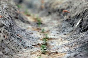 У РНБО розглянули питання збереження та відтворення лісів