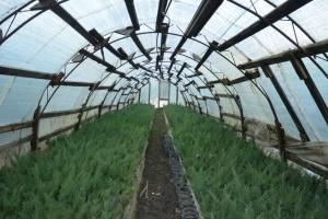 В Киеве в этом году увеличат количество зеленых насаждений