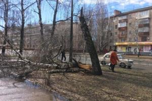 Буревій на Чернігівщині залишив без світла 62 населені пункти