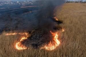 Пожары в плавнях на Херсонщине: полиция открыла три дела