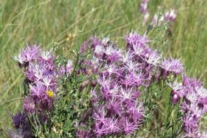 На Луганщине создали почти 90 природно-заповедных объектов