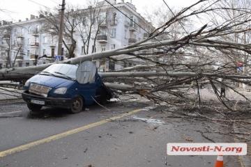 Baum zerquetscht Kleintransporter in Mykolaiw – Fotos, Video